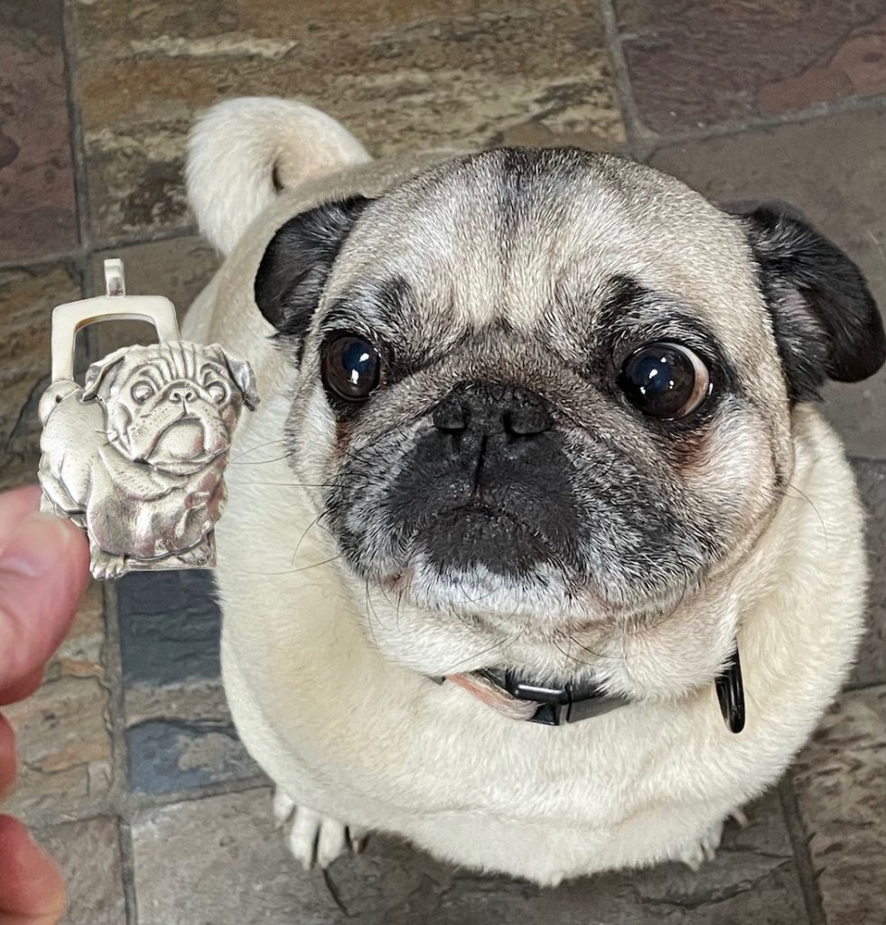 Fawn Pug Dog, looking at a silver keychain, of his likeness, being held in front of him.